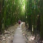 Bamboo Forest in Seven Sacred Pools